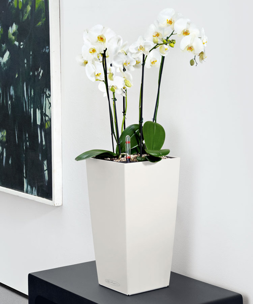 Orchid in a floor pot