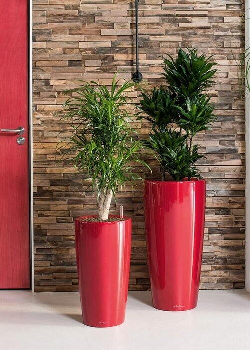 How to Choose a Large Indoor Planter and Plant for your Home