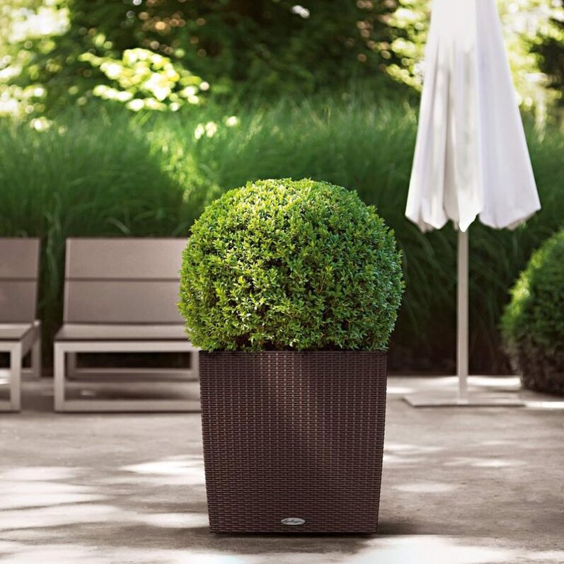 Rectangular or square planters of small size