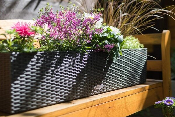 Rectangular or trough planters