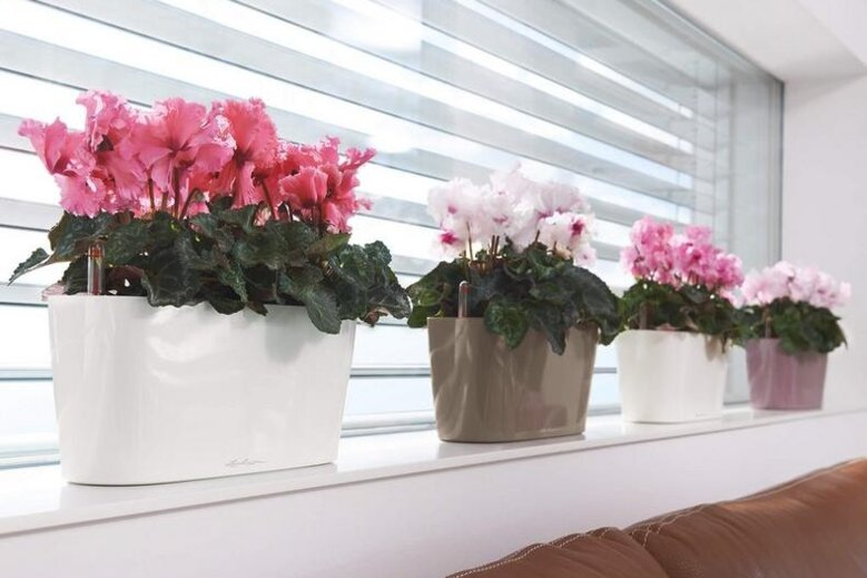 Indoor trough planters